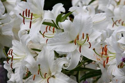 Terry Hershey: Terry's Garden &emdash; IMG_4995